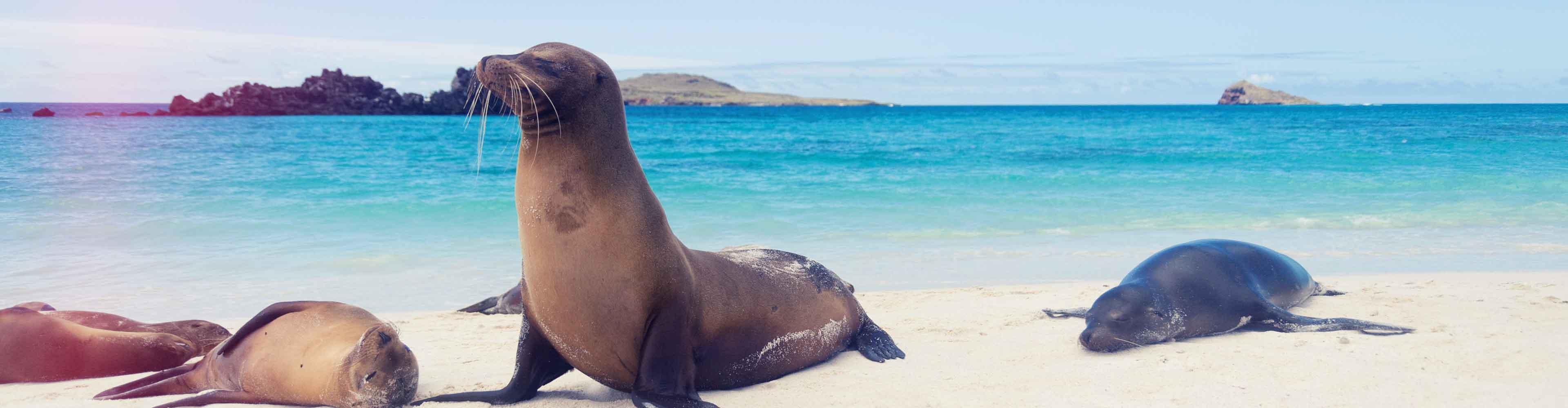 Galapagos Express (Daphne)