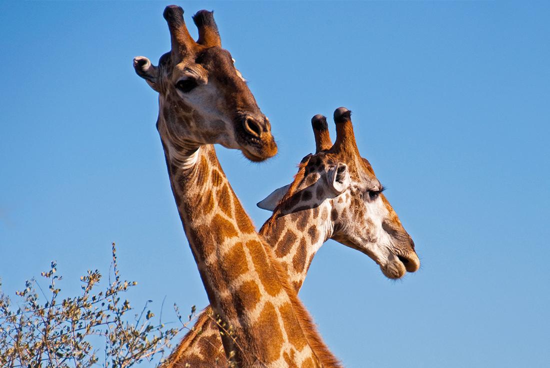 South Africa Teenage Safari 1
