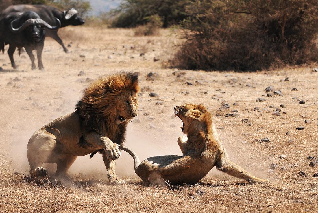 South Africa Teenage Safari 2