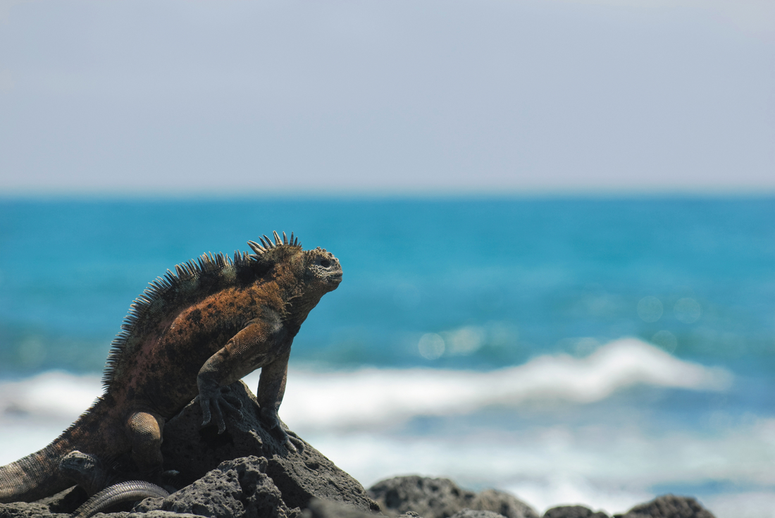 Galapagos at a Glance: Southern Islands - (Daphne) 2