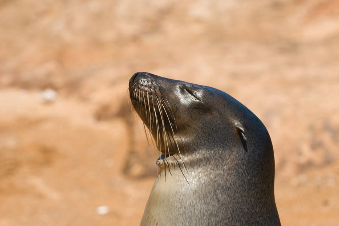 Galapagos at a Glance - Southern Islands - (Daphne) 3