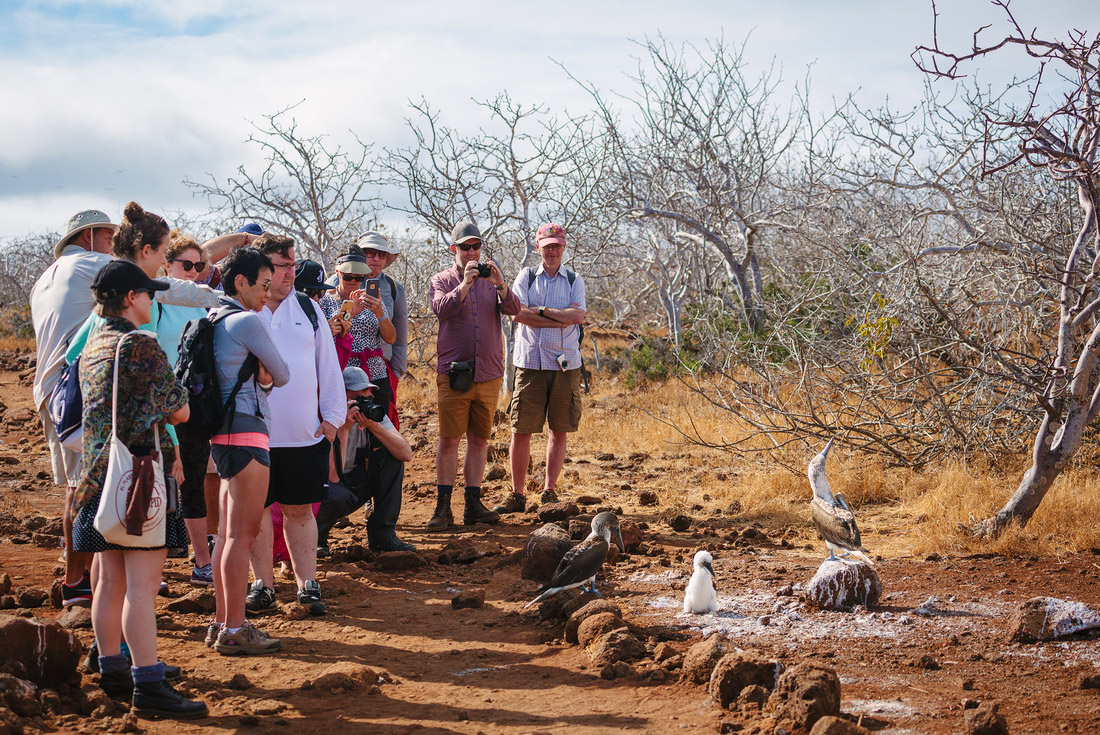 Galapagos Adventure: Northern Islands (Daphne) 2
