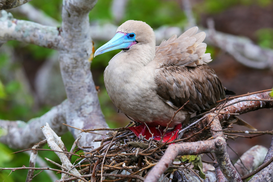 Galapagos Adventure: Northern Islands (Daphne) 3