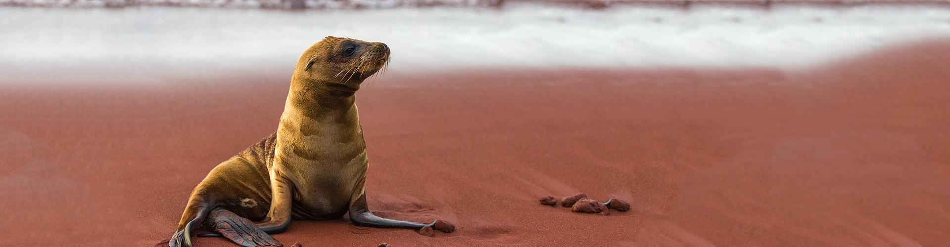 Galapagos Adventure: Northern Islands (Daphne)