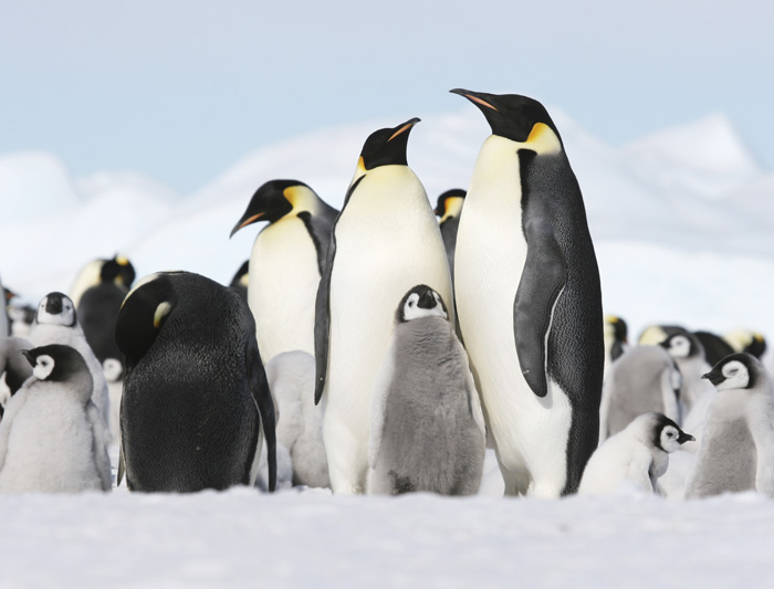 Antarctica East & West: Peninsula in Depth (Ocean Endeavour) 2017 - 2018 3