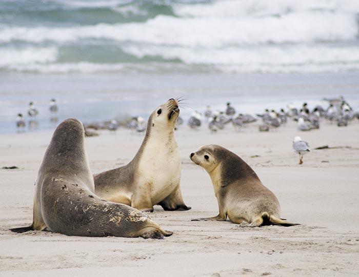 Southern Ocean Wildlife Adventure (Original) 1