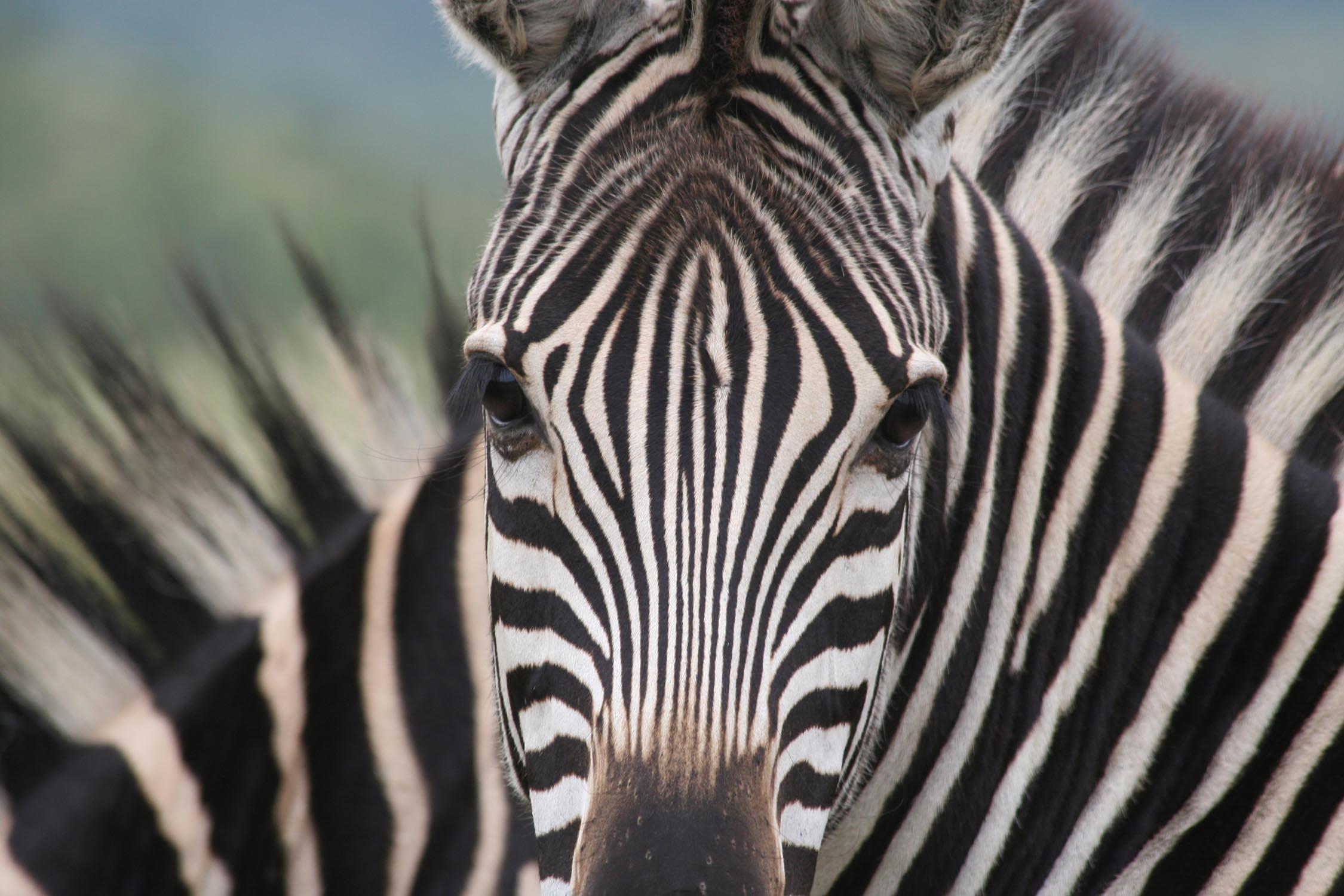 Botswana Photography Safari with Ben Mcrae 1