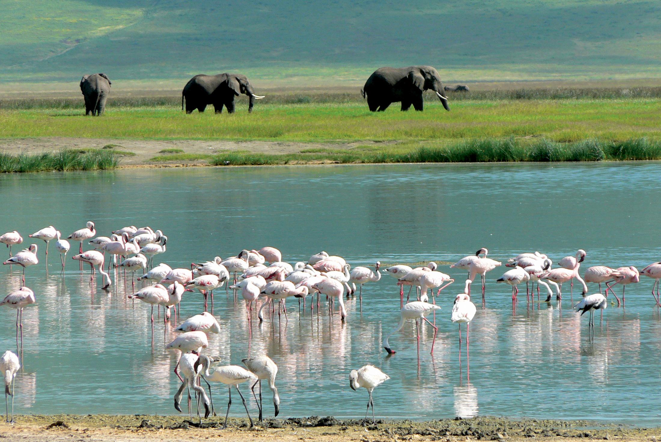 Best of Tanzania 2
