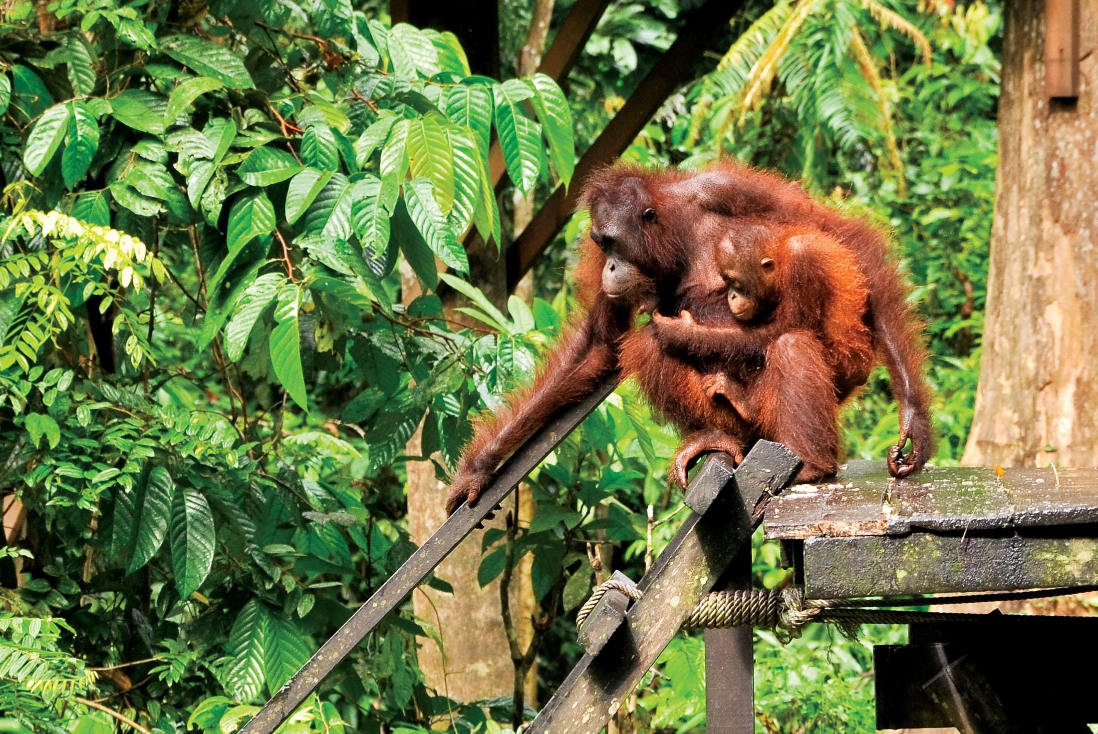 Sabah Discovery 1