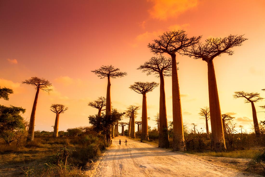 Madagascar Baobab Tree Trail 4