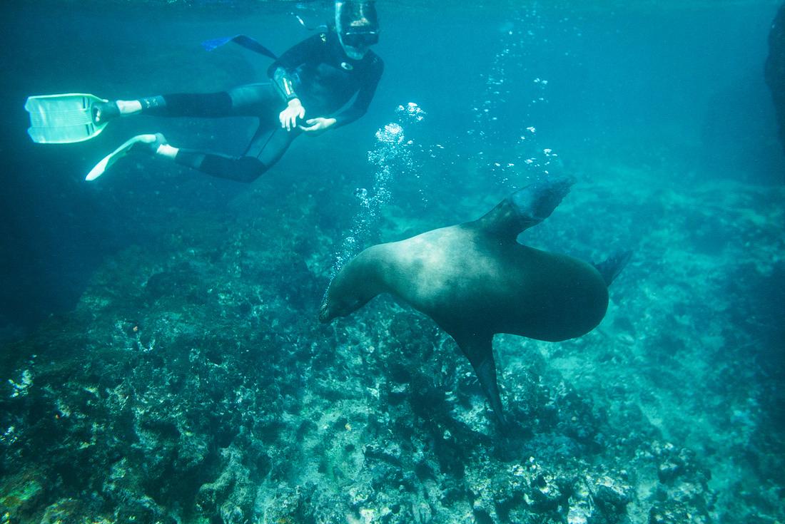Active Galapagos 1