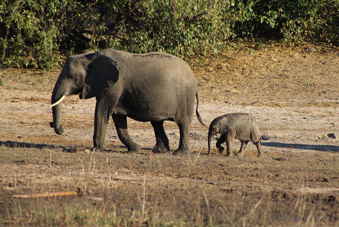 Chobe National Park - Short Break 2