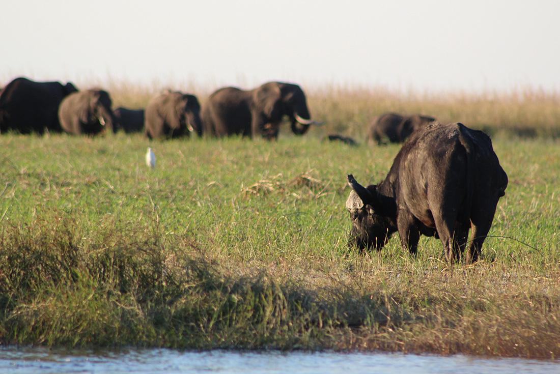 Chobe National Park - Short Break 3