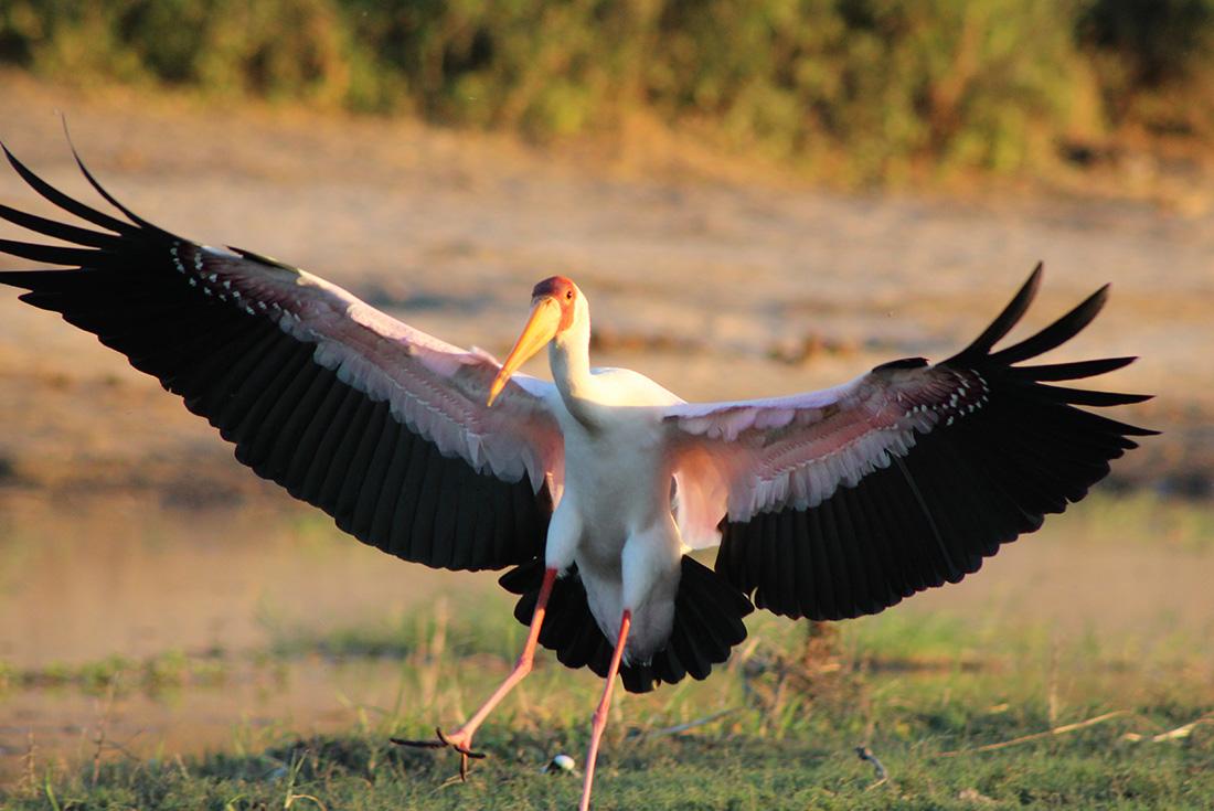 Chobe National Park - Short Break 4