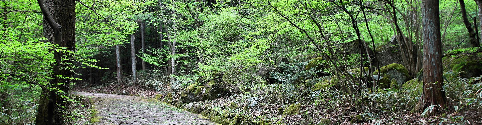 Japan: Hike, Bike & Kayak