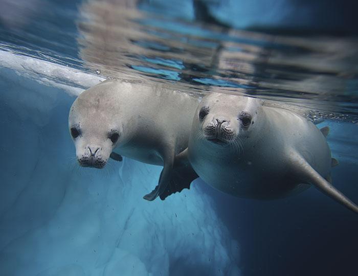 Photography Series: Antarctic Explorer 4