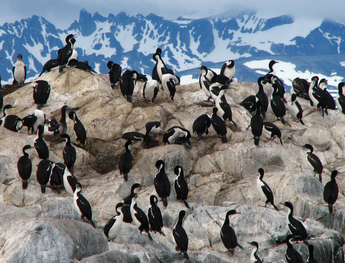 Antarctic Explorer: From Buenos Aires 10 day 3