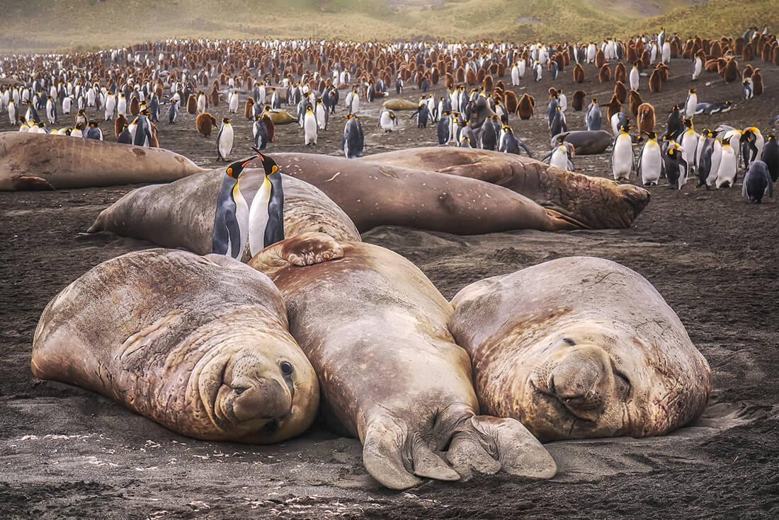 Antarctic Peninsula, Falkland Islands & South Georgia: From Buenos Aires 2