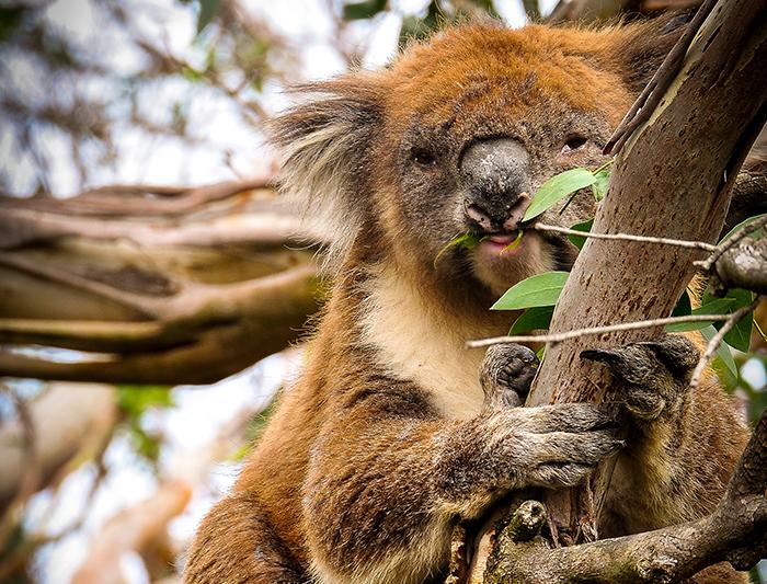 Alice Springs to Melbourne Overland ex Yulara 3