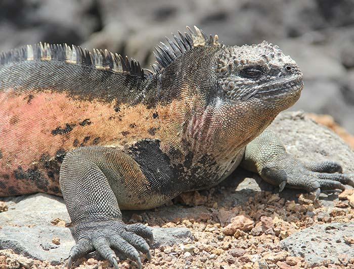 Grand Galapagos - (Grand Queen Beatriz) 3