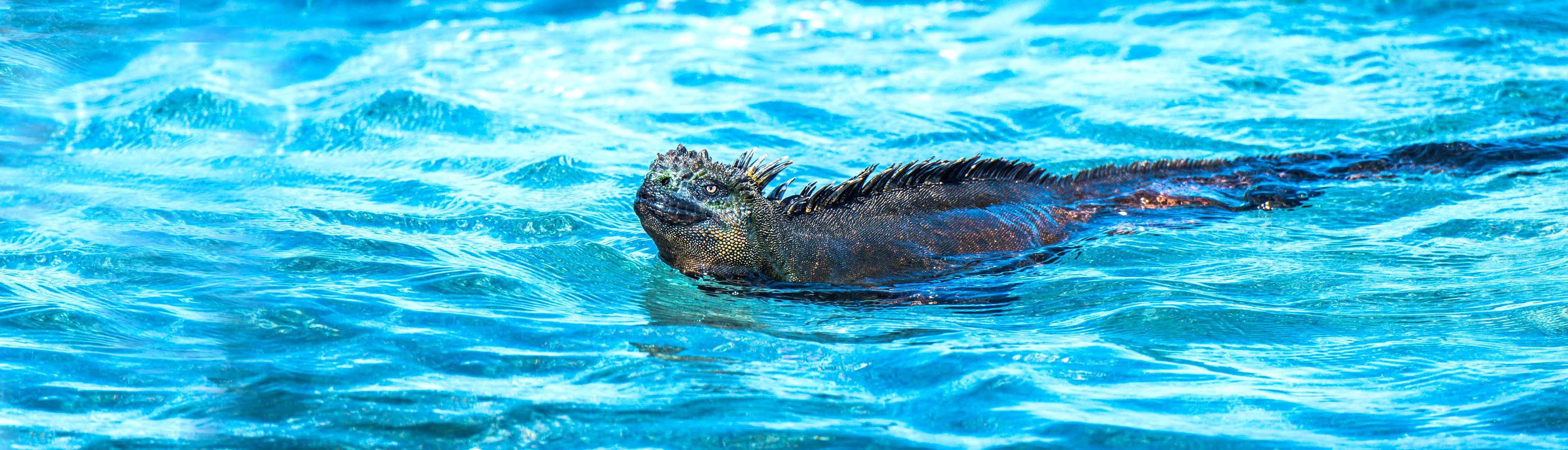 Galapagos Encounter – Southern Islands (Grand Queen Beatriz)