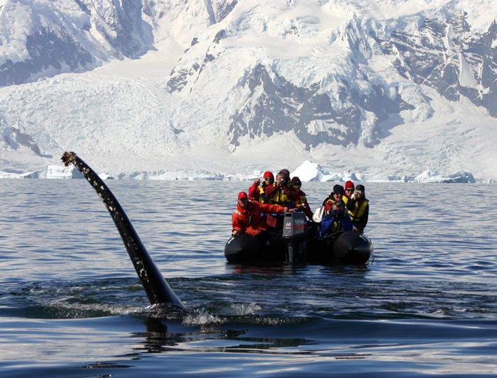 Discover Antarctica 1