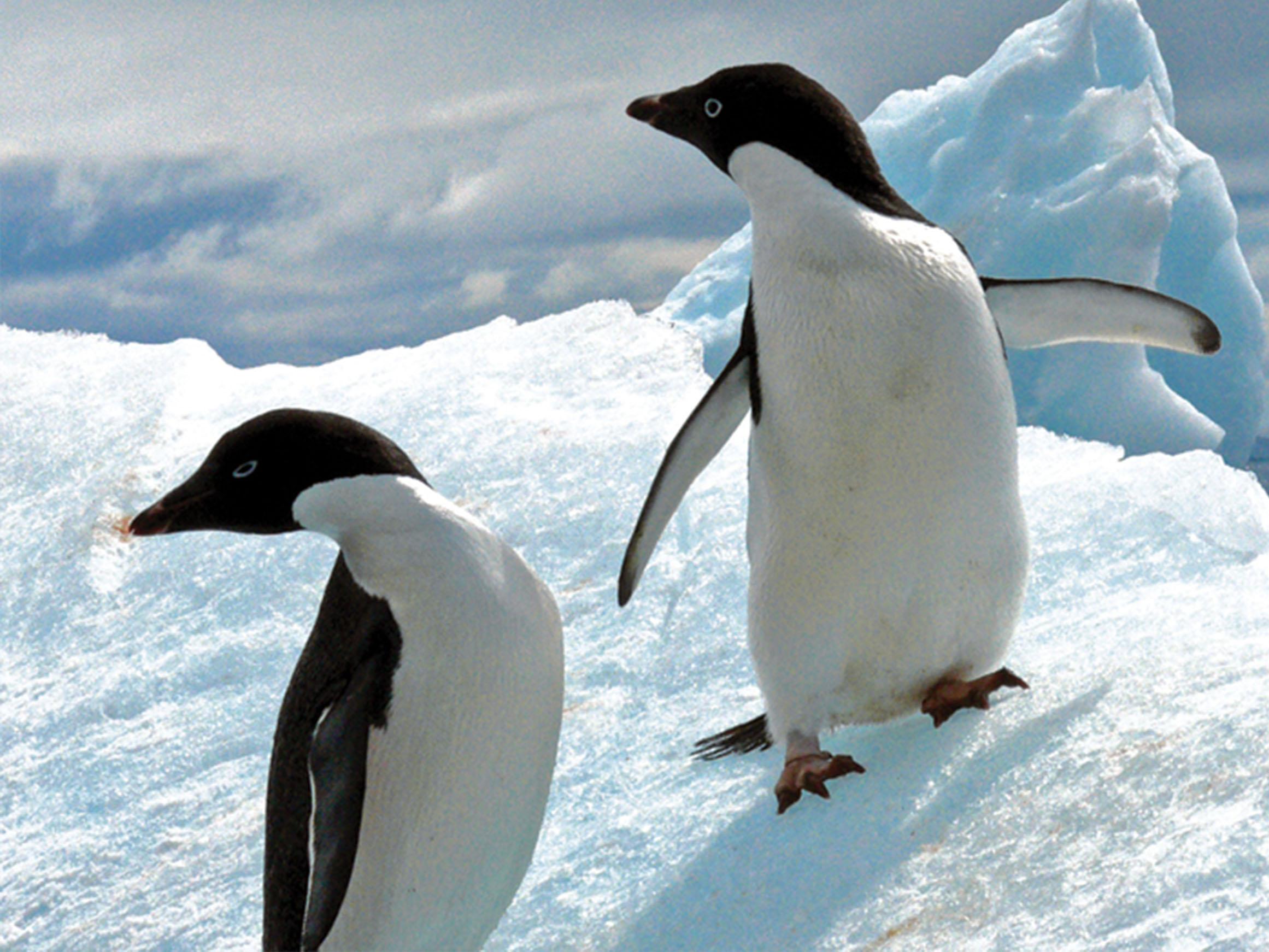 Discover Antarctica 2