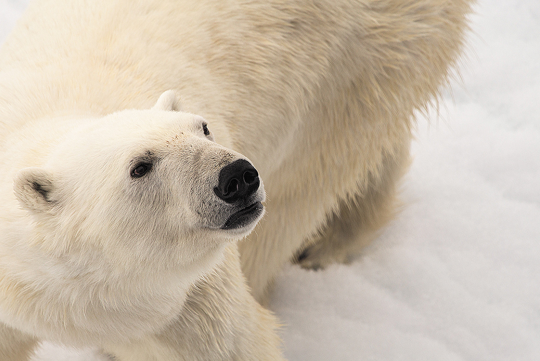 Arctic Unveiled 2