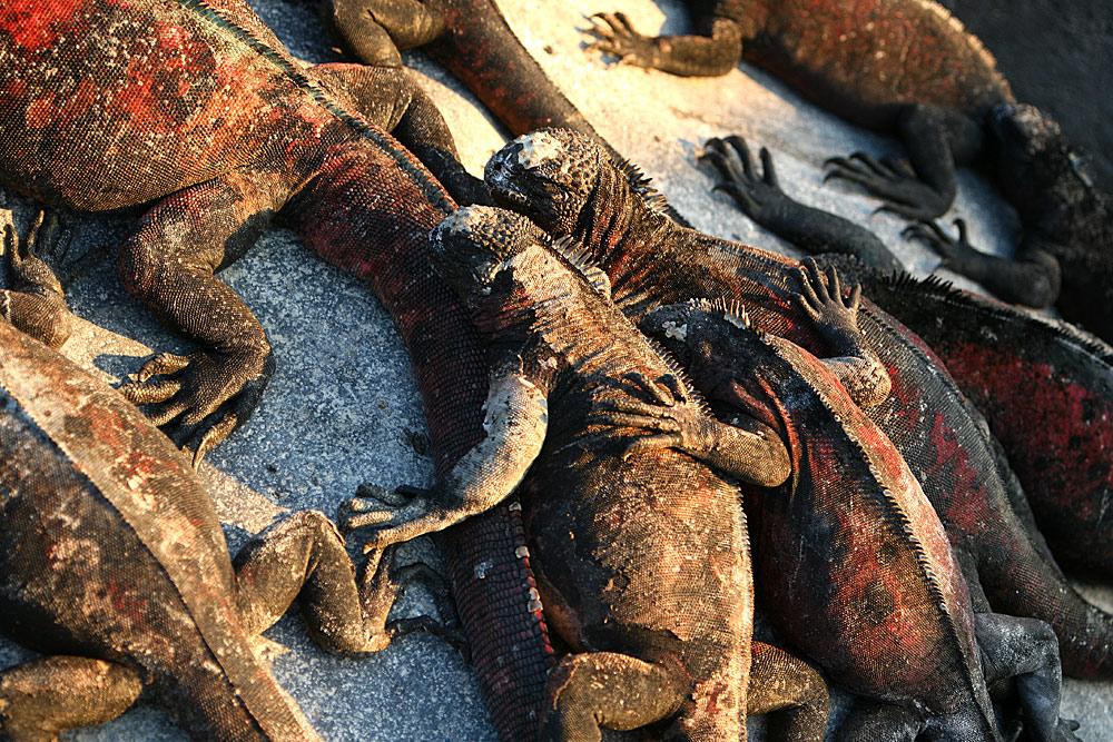 Treasures of Galapagos - Western & Central Islands (Grand Queen Beatriz) 3