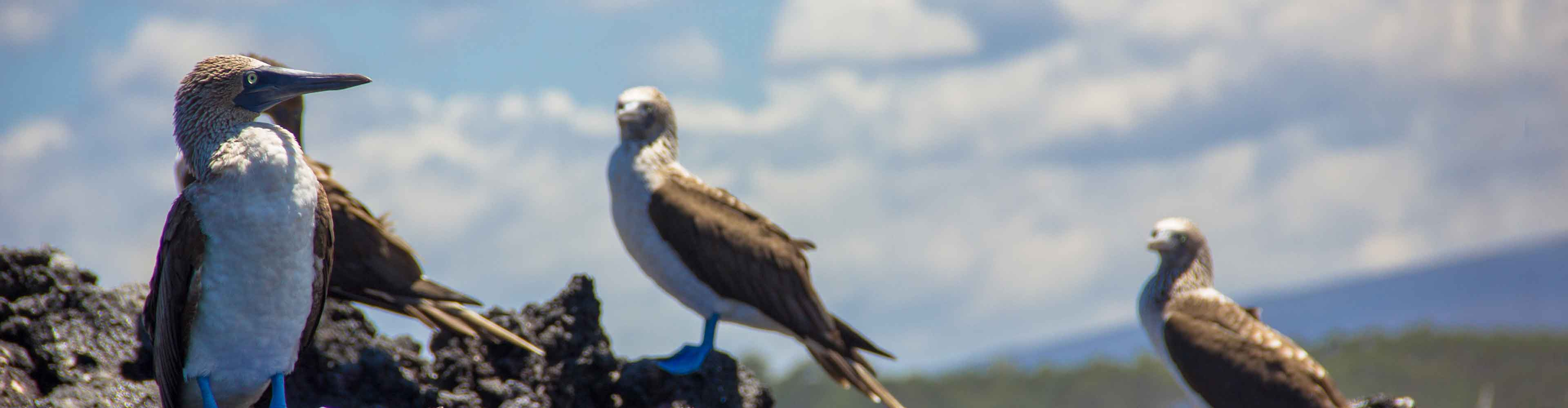 Galapagos Voyager – Central Islands (Grand Queen Beatriz)