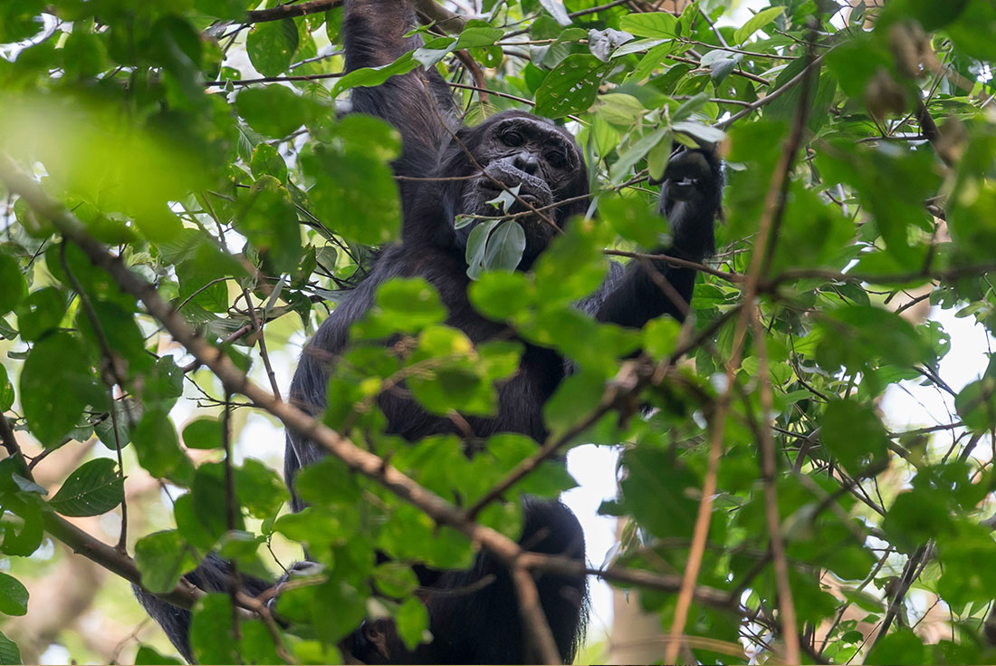Uganda Expedition: Rhinos, Falls & Chimps 2