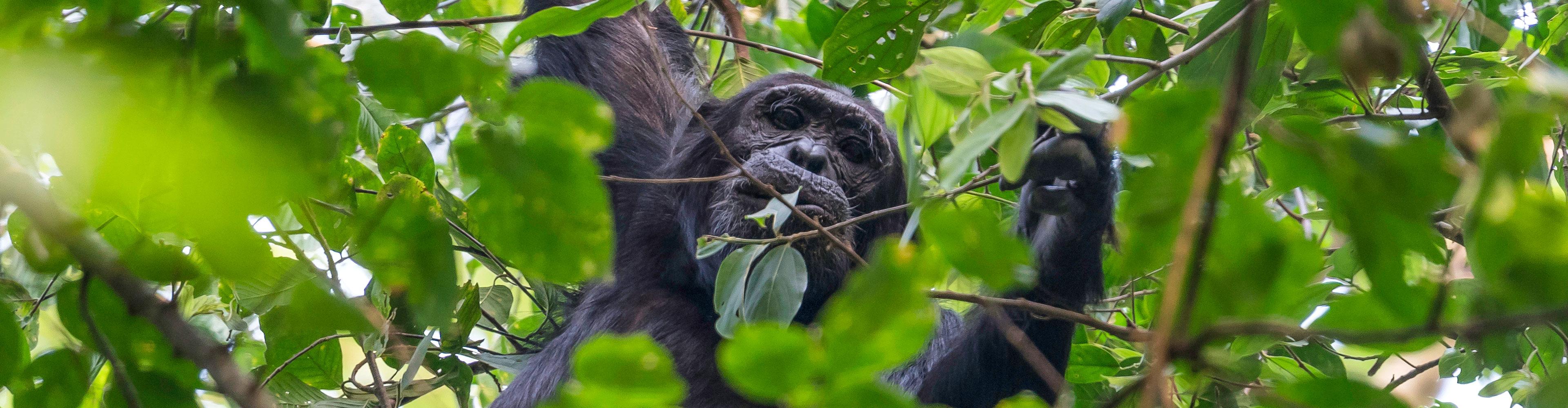 Uganda Expedition – Rhinos, Falls & Chimps