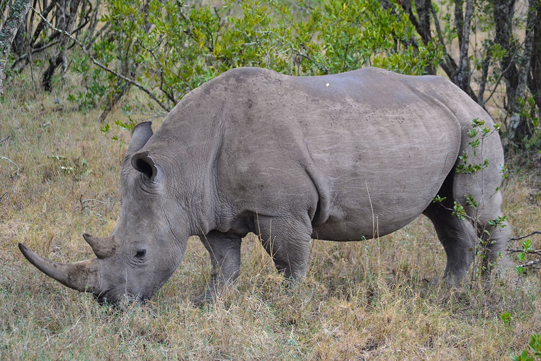 East Africa Expedition - The Last Northern White Rhinos 1