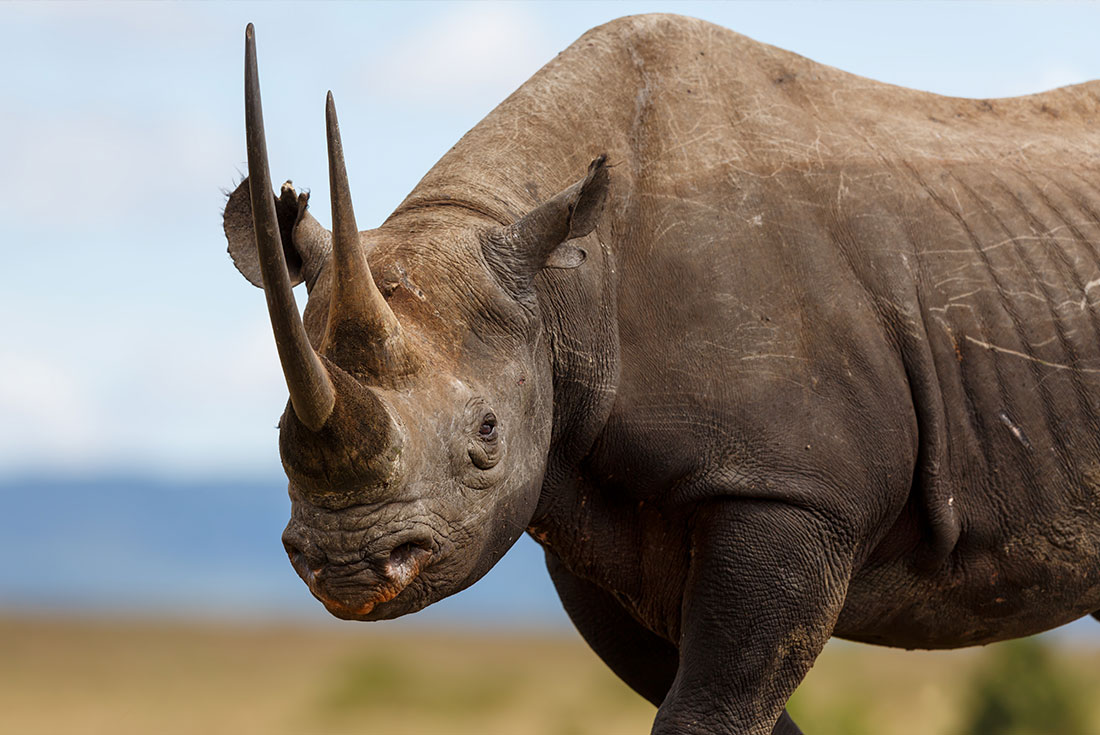 East Africa Expedition - The Last Northern White Rhinos 3