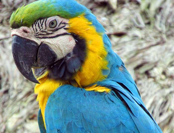 Bolivian Amazon Jungle 1