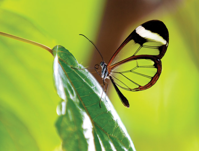 Ecuador Amazon Wilderness- 4d (Sacha Lodge) 1
