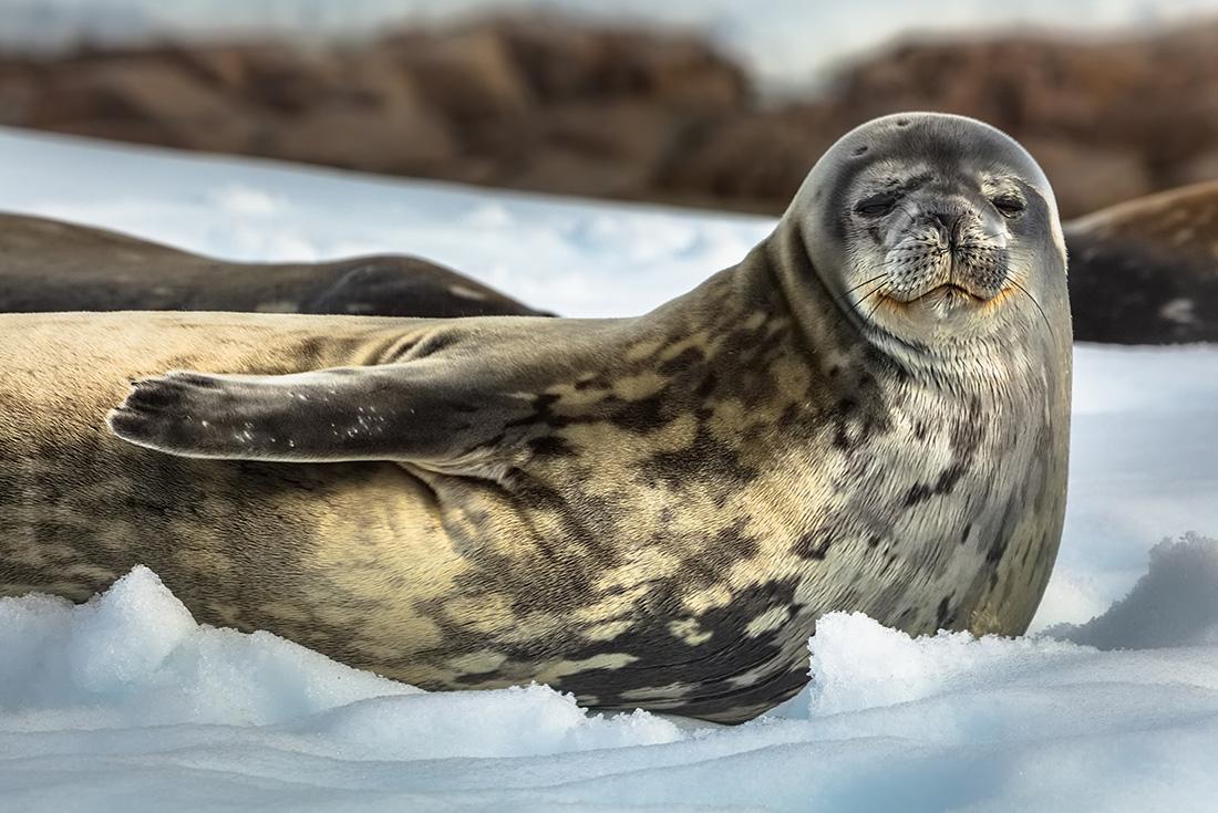 Exclusive Antarctica, South Georgia and the Falklands 4