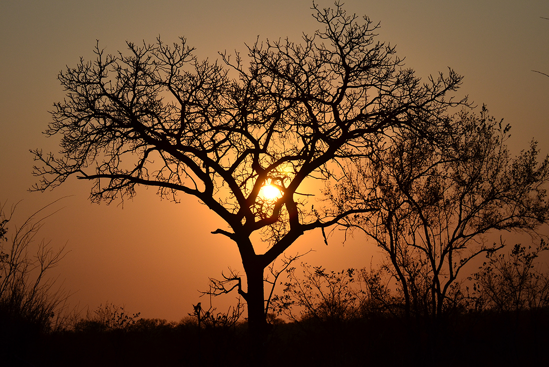 Kruger Experience - Lodge (4 days) 3