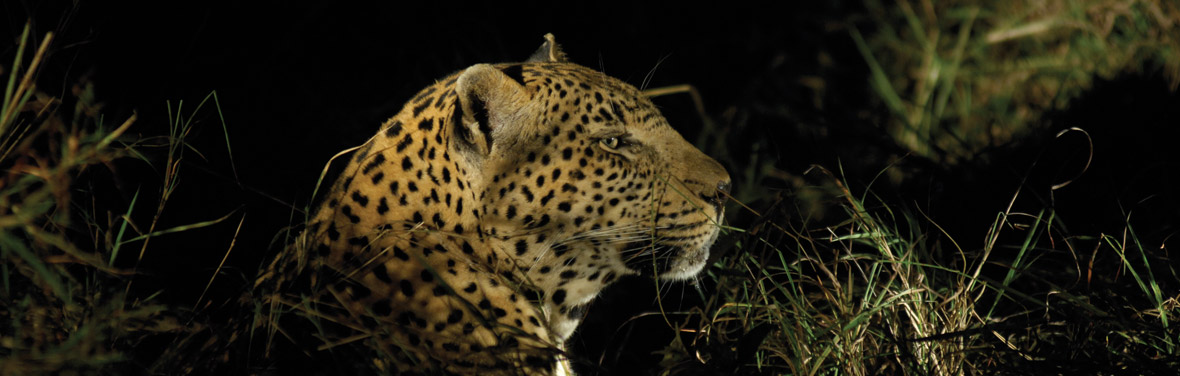 Kruger Experience – Lodge (3 days)