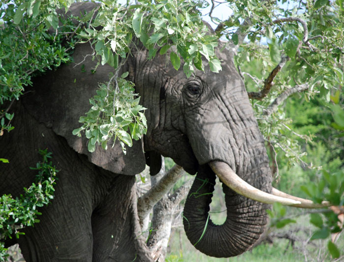 Kruger Experience - Lodge (3 days) 3