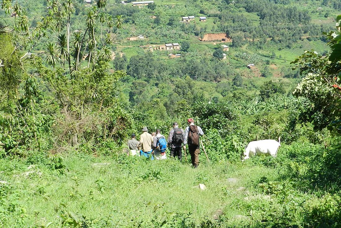 Uganda Gorilla Shortbreak: Original 2