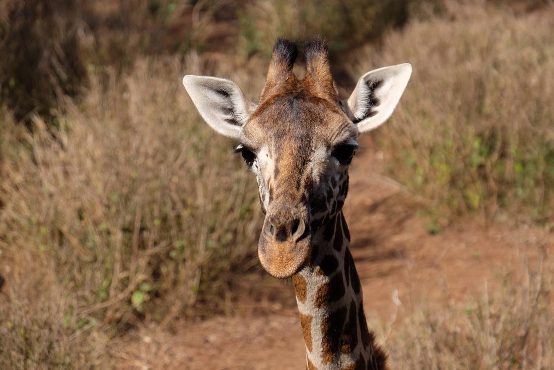 Kenya Safari Under Canvas 4