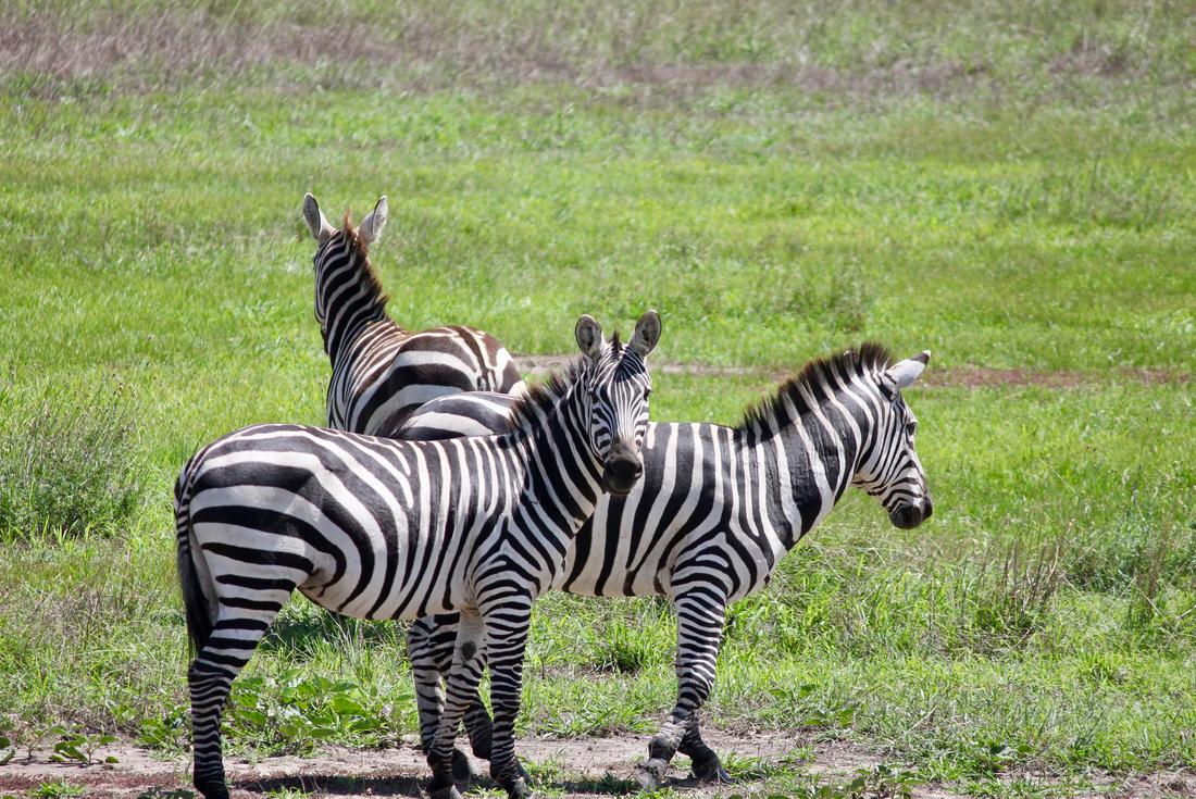 Tanzania Safari under Canvas 4