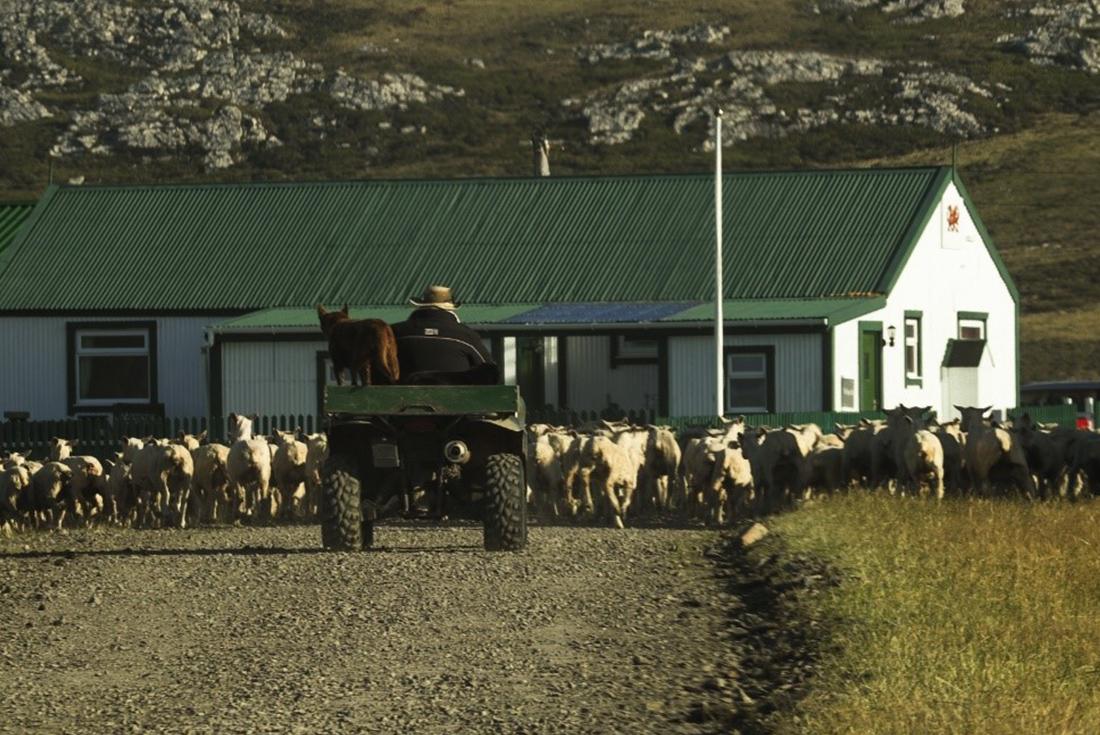 Falkland Islands Expedition: Past & Present 3