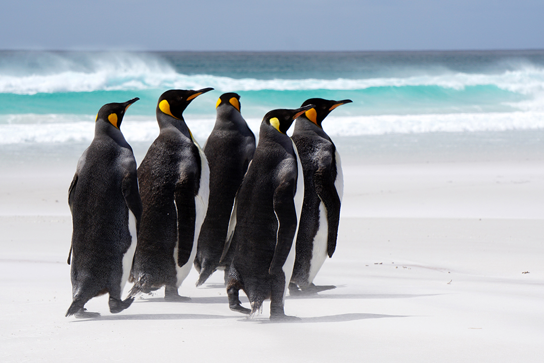 Falkland Islands Expedition: Past & Present 4