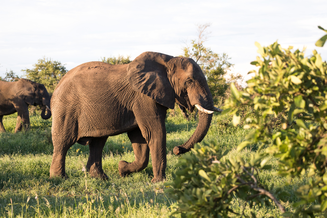 Game Parks of Southern Africa 1