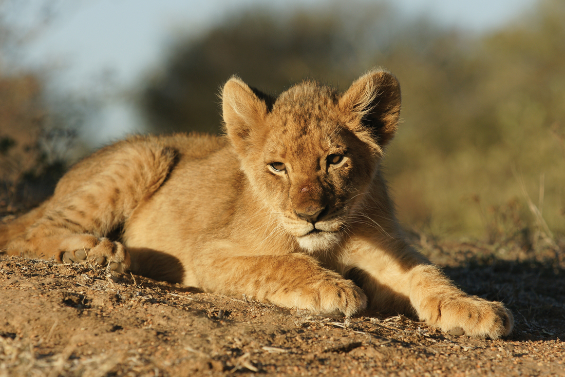 Game Parks of Southern Africa 4