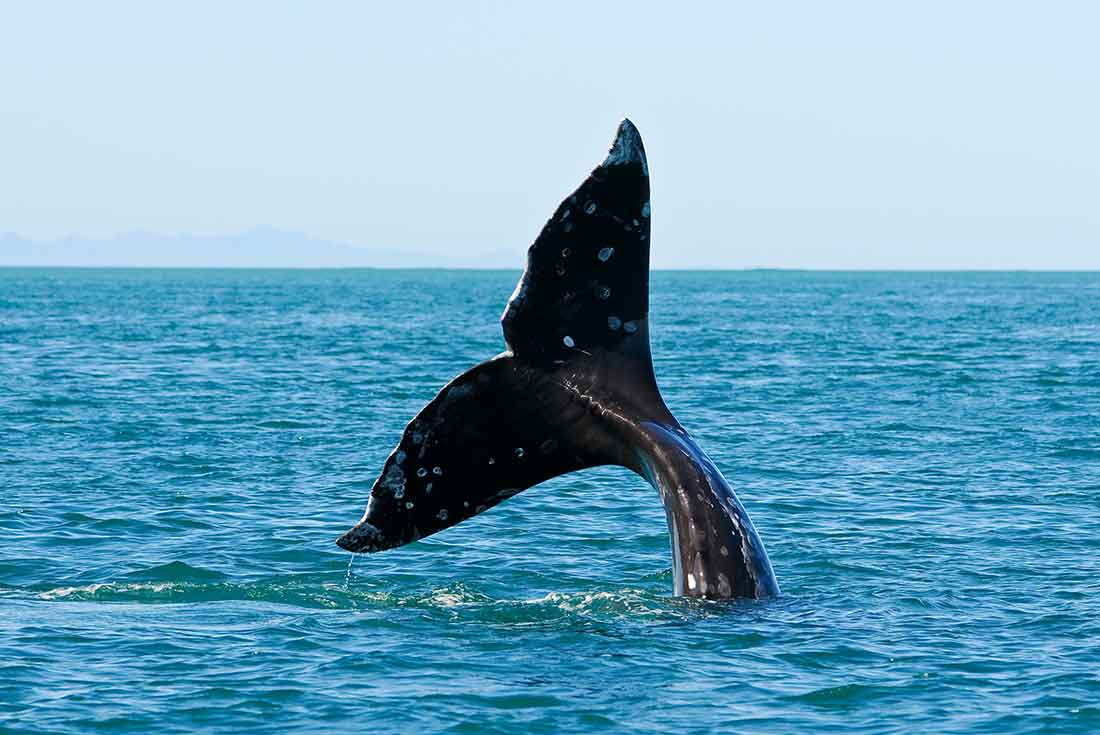 Mexico Sailing & Whale Watching Expedition 2