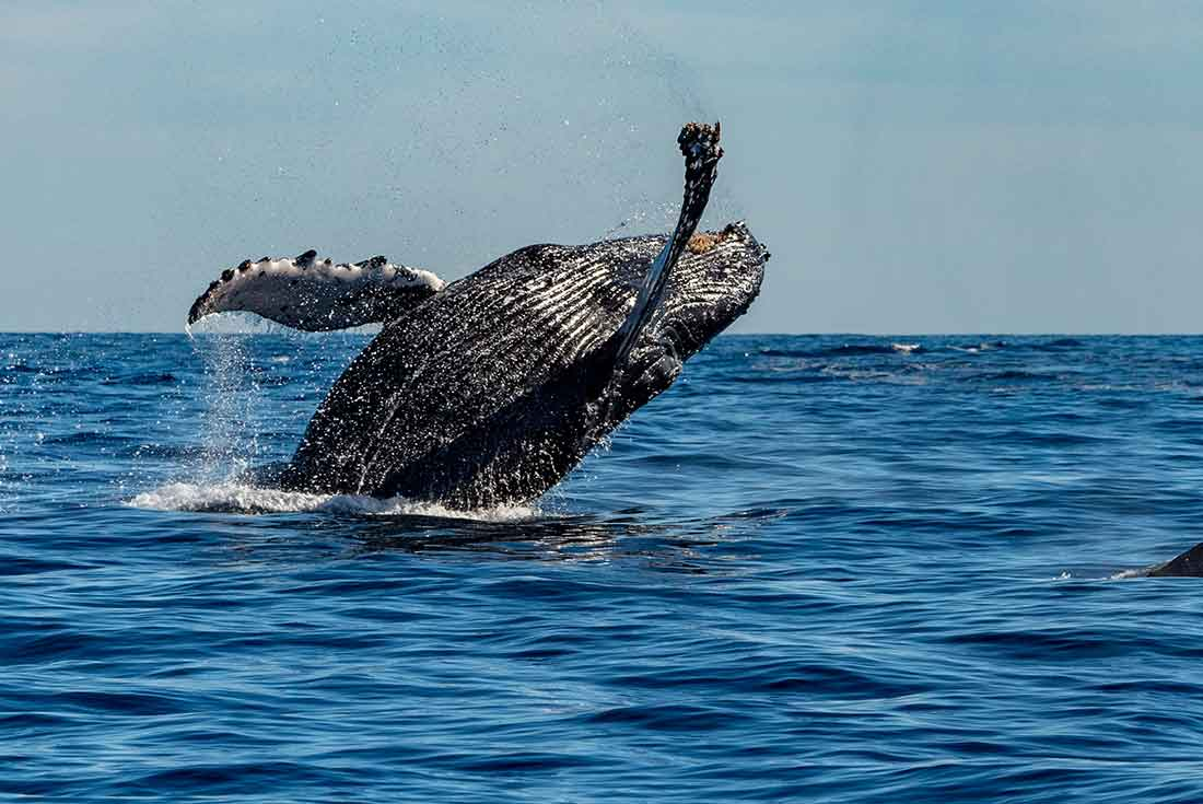 Mexico Sailing & Whale Watching Expedition 4