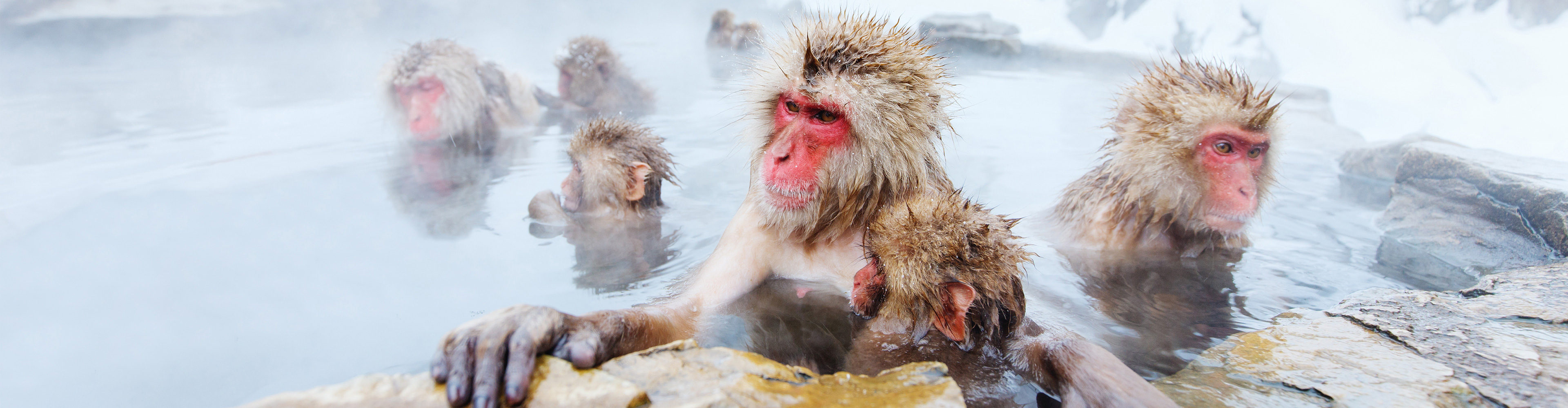Japan: Land of the Snow Monkeys